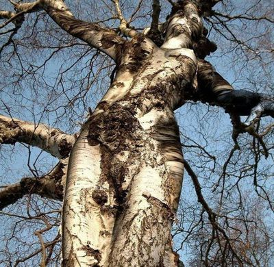 Strange_and_funny_trees_43_2
