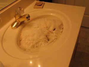 Cat_bowl