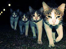Cat_eyes_2