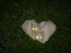 Cats_eye_2