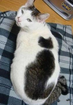 0000cat_on_cat