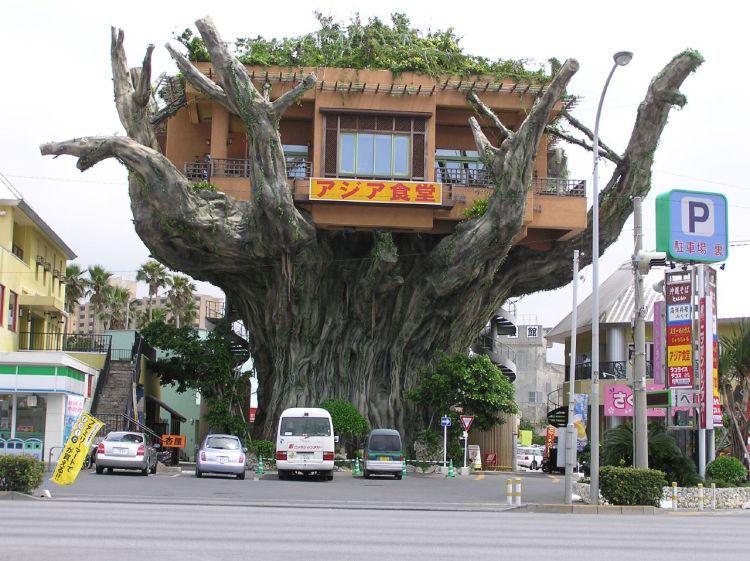 Tree_houses_22_4
