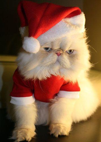 Santa_animals_01