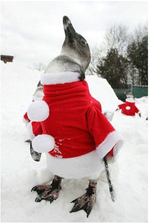 Santa_animals_64